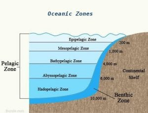 Pelagic fishing zones
