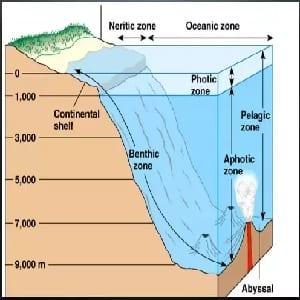 Pelagic zone fishing