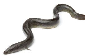 Eels Cronulla Sydney