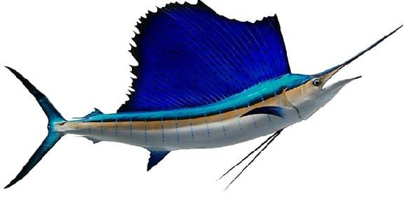 Sailfish bag limits Cronulla NSW