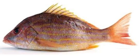 Snapper fish bag limits Cronulla NSW