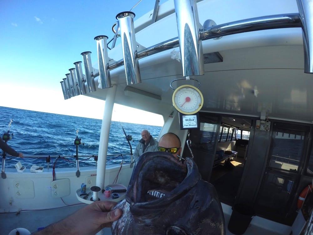 Blue Eye Cod fishing charter Browns Mountain Sydney