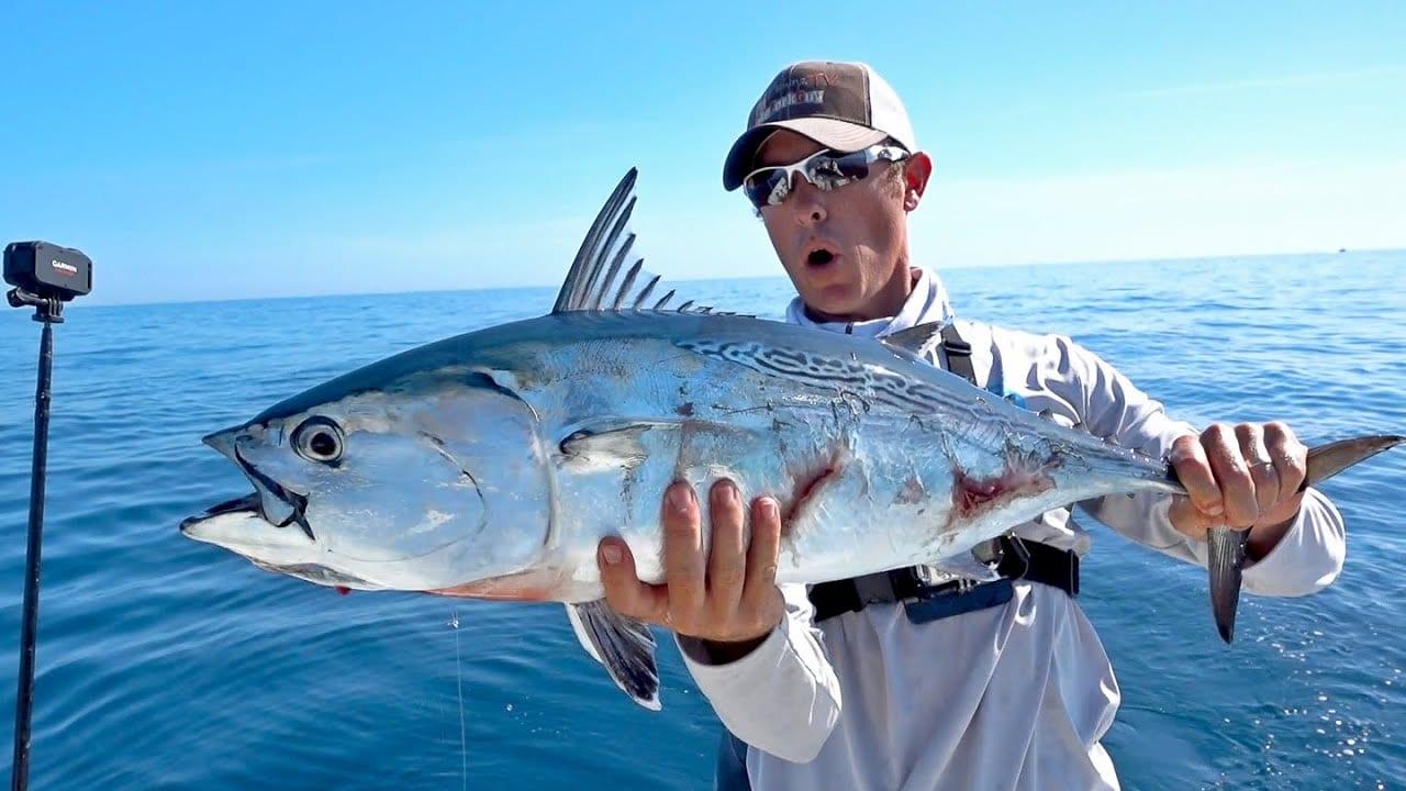 Bonito fish Cronulla Sydney