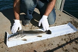 NSW DPI catch and release mat